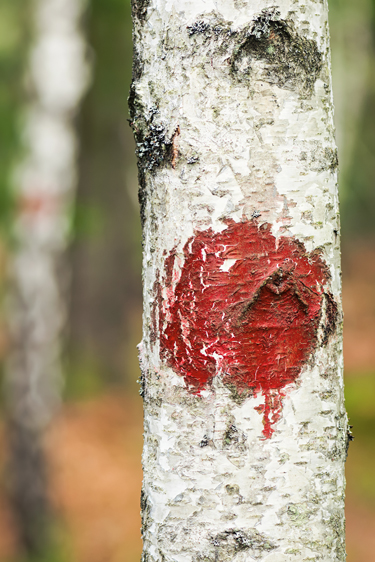 Waldmarkierung